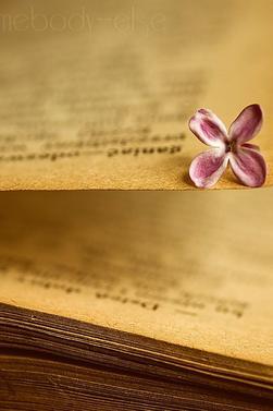 Annuaire Fiction , OS et autre