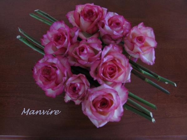D'un second cube, ces roses ont jou� la discipline....