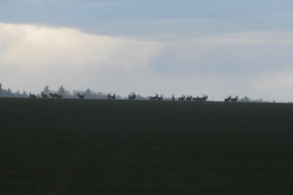 Derrière l aérodrome le 8 février 2014
