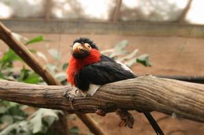 Dans la serre tropicale du zoo parc de beauval ; A Saint-Aignan ( 41)