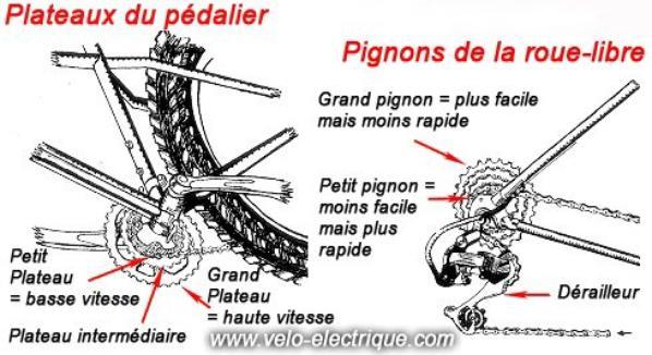 Leçon de vélo.............