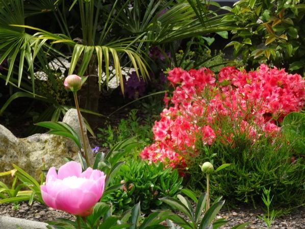 Un peu du jardin......
