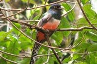 Pantanal P�ssaros / Oiseaux du Br�sil