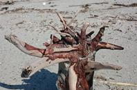 Bois flott�s au gr� des plages !