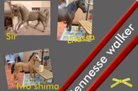 Les chevaux suite