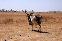 Excursions brousse voir la vrai vie s�n�galaise