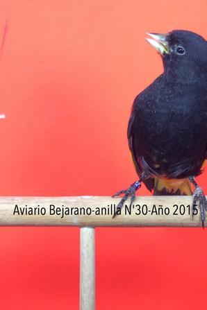 Algunos Negritos de Bolivia para esta temporada 2016