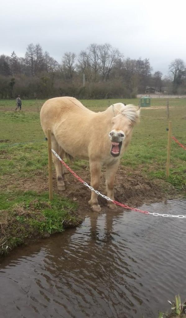 le cheval c'est son dada