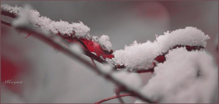 hiver .........