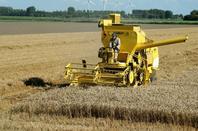 Nostalgia grain battage Herkingen Pays-Bas 06-08-16