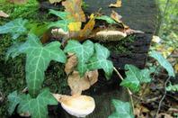 Le sol de nos bois... Bois de la Bagasse...
