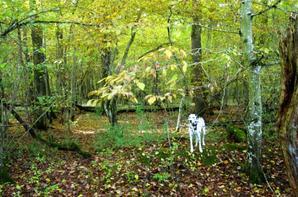L'automne dans les bois....