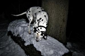 Nuit hivernale.....
