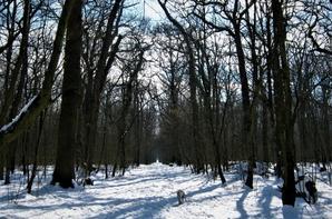 En promenade.....l'hiver est bien sympa...