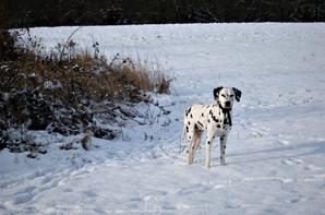 L'hiver et la neige, au bord de la piste....