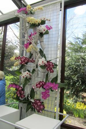 Mode et orchid�es