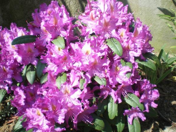 quelques fleurs, j'aime!!