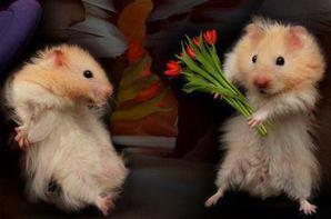 Bonne Saint Valentin !