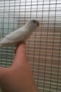 Quelque nouveaux oiseaux