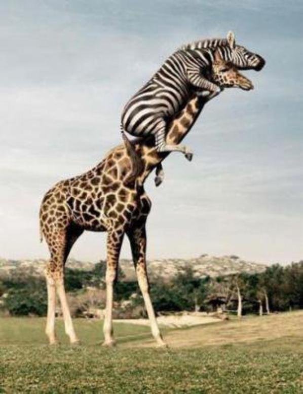 Waptrick Girafe drôle Photos gratuit telechargez