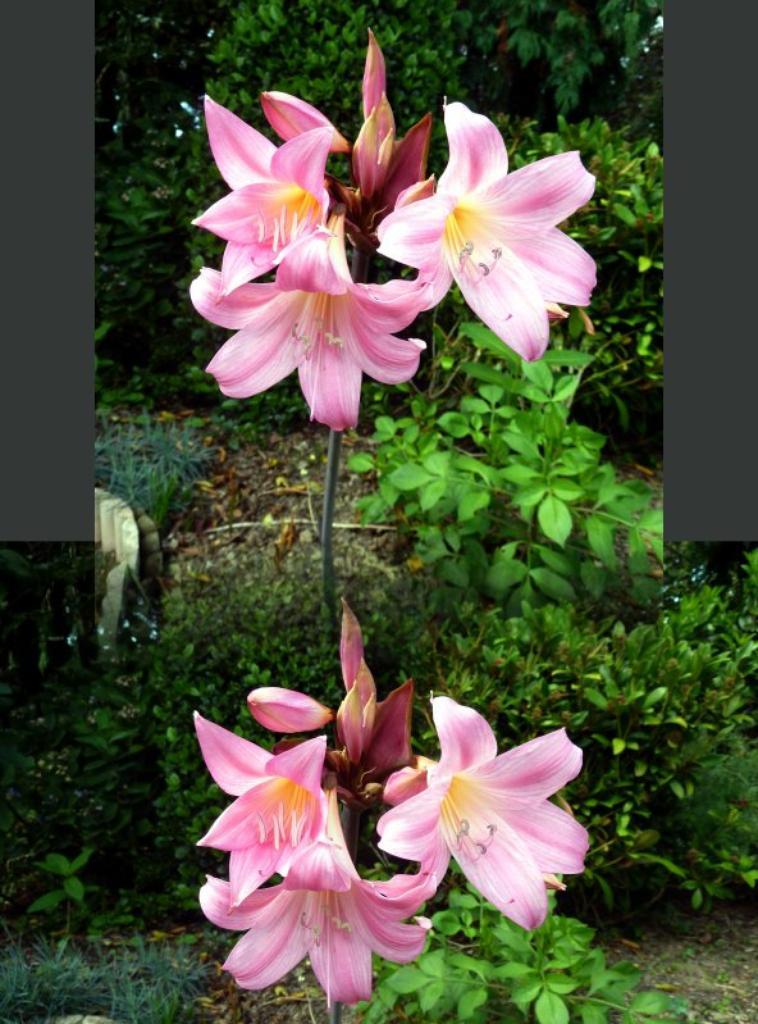 Petit tour au jardin pour admirer les fleurs art floral - Petit jardin culinary arts tours ...