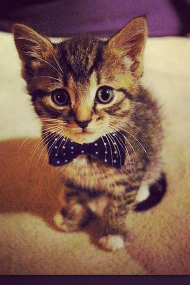 Chaton swag blog de emmadu62100 - Image de chaton trop mimi ...