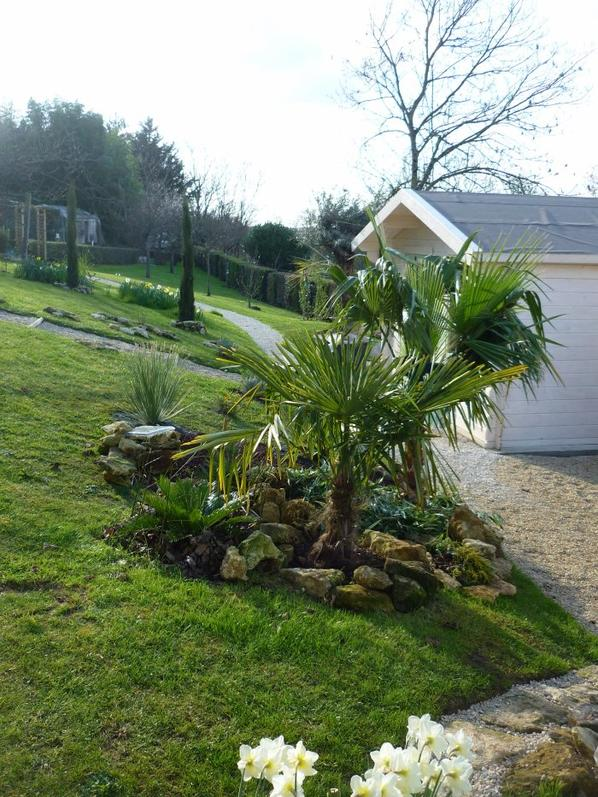 Am nagement du massif des palmiers vite au jardin - Massif avec palmier ...