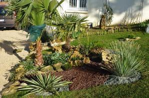am nagement du massif des palmiers vite au jardin. Black Bedroom Furniture Sets. Home Design Ideas