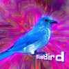Bluebird95