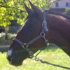 cavallo26
