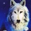mes-loups-et-moi