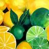 the-school-of-lemon