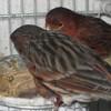 aviariosmaresme