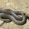 serpents-du-monde