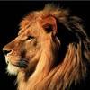 lionspatrol07