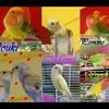 ExoticBird971