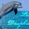 miss-dauphins87