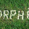 groupeorphe