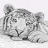 TigresseLand
