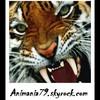 Animania79