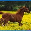 nOs-deux-chevaux