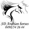 SDarabianhorses
