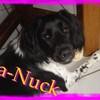 la-Nuck