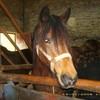amour-pour-les-chevaux22