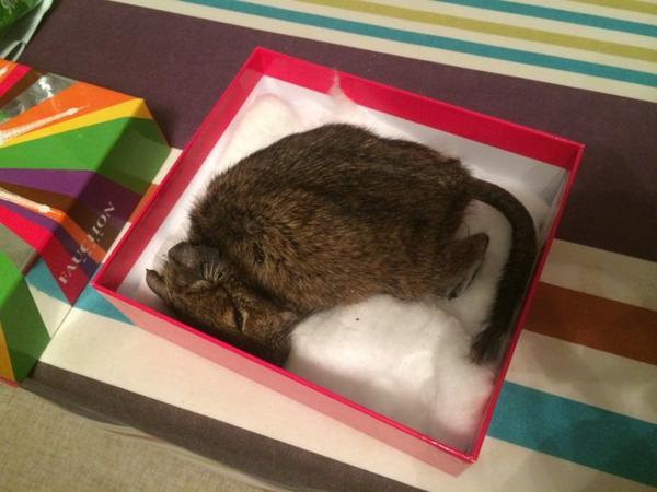 #RIP petit Octodon Tails 2009-2015