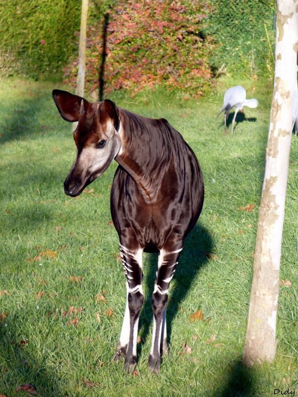 Bienvenue sur mon Blog Fan du ZooParc de Beauval (Page non officielle du Zoo)