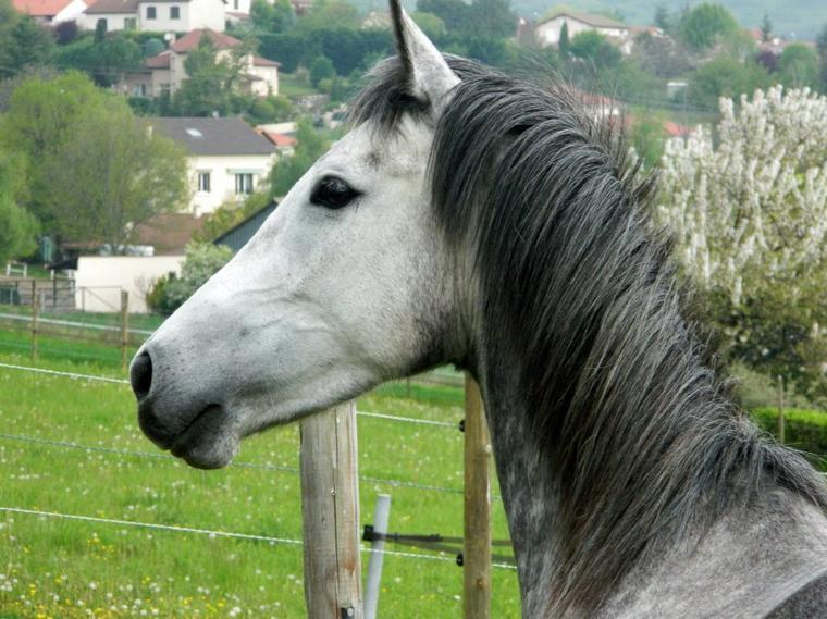 """"""" La liberté, c'est la vérité. On ne peut plus rien imposer, c'est Tout ou Rien ! Soit on intéresse le cheval, on est confortable et il trouve en nous du bon et collabore, soit il part parce qu'il n'a rien a gagné, parce qu'on ne représente rien pour lui... C'est la qu'on voit réellement se qu'il faut retravailler et où en est notre relation avec ! La vérité. """""""