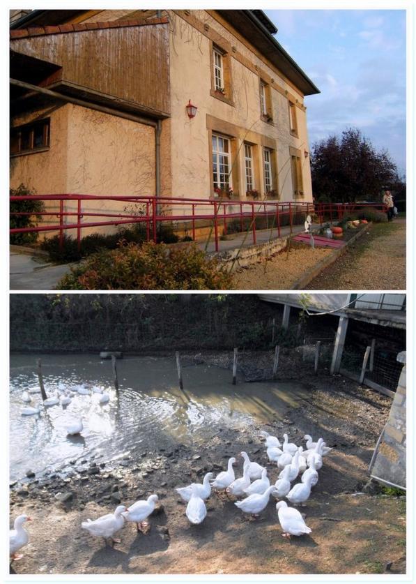 �tang de lachauss�e Meuse(55) le 2 novembre 2014