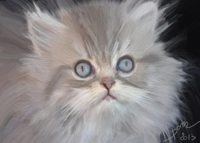 De sublimes chats ......