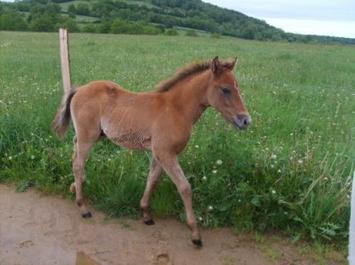 Un cheval bien connue: le Camargue